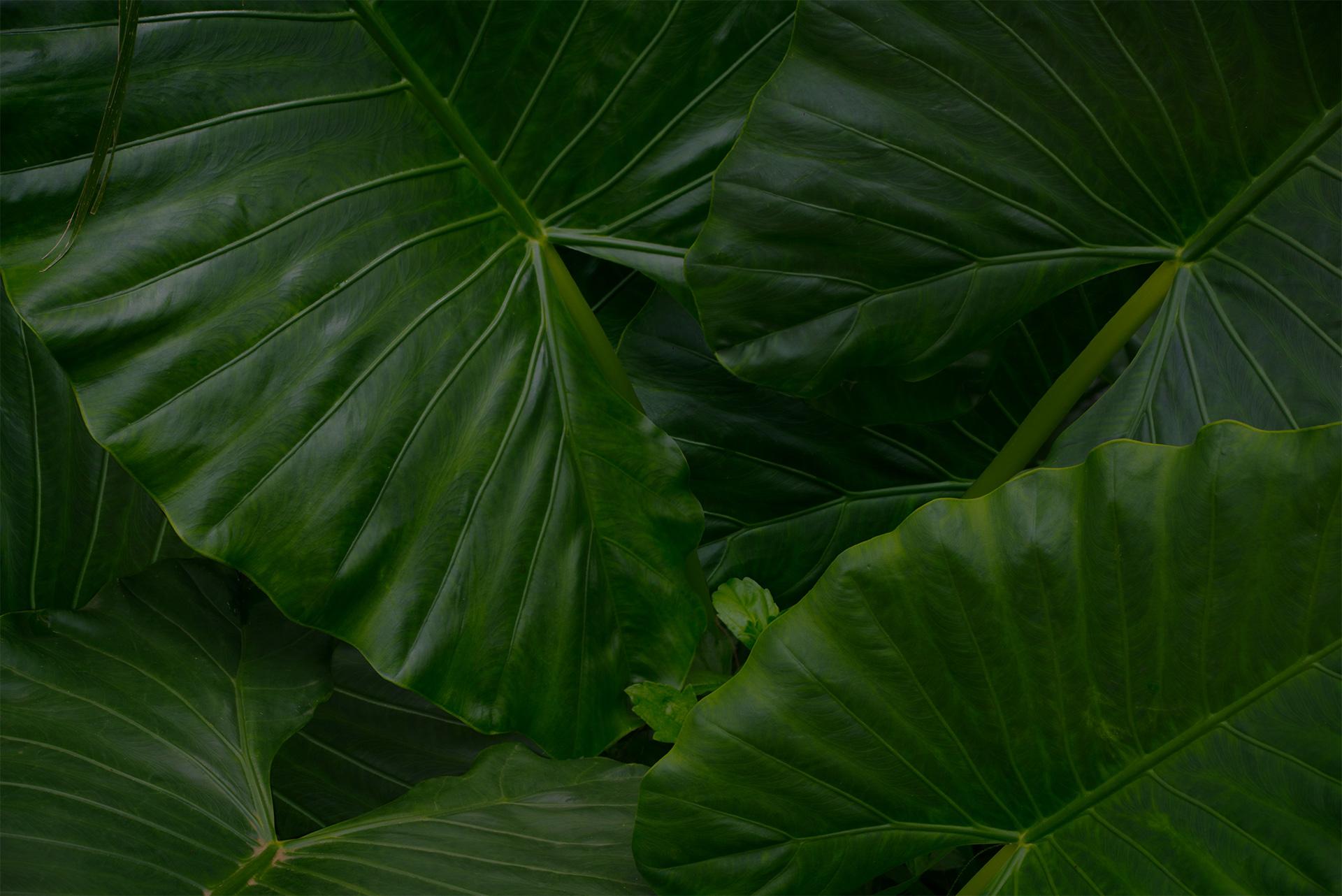 jungle-leaves-GGLZ8NY